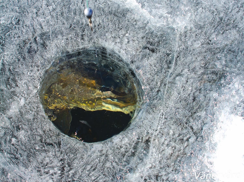 Gädda fångad på ismete under vintern.