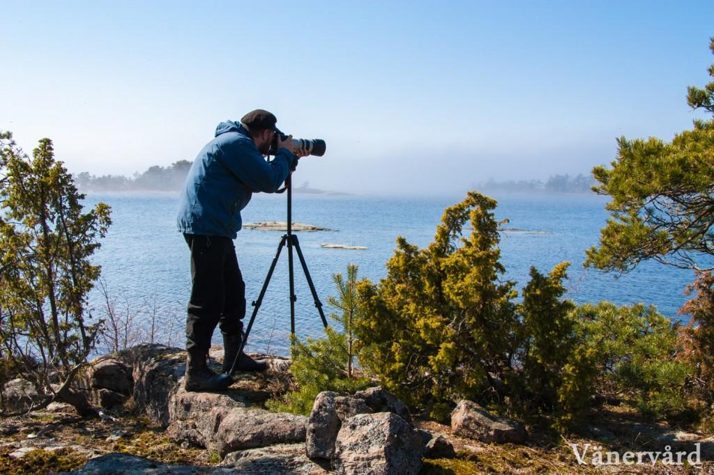 Fågelfotografering i Djurö skärgård en tidig morgon