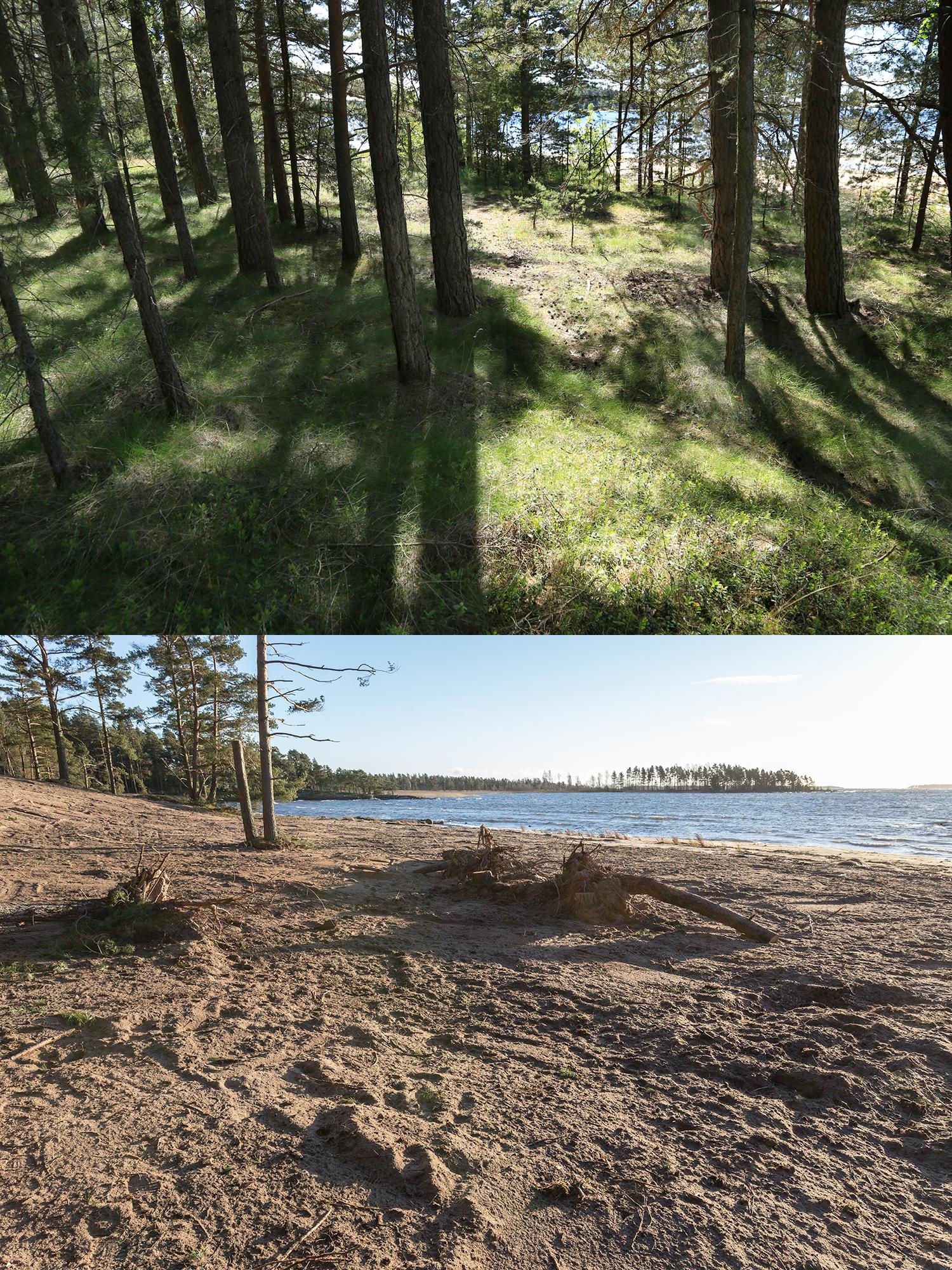 Återfotografering av sandstrand efter restaurerinsarbete.