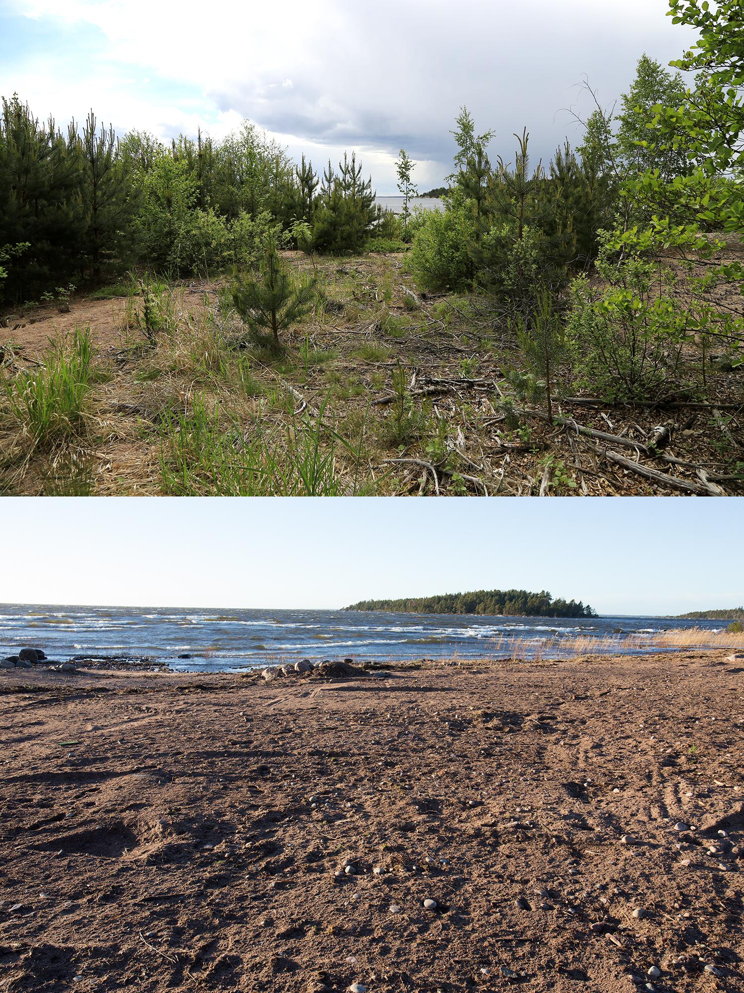 Återfotografering på sandstranden vid Tallskär, före och efter åtgärd.