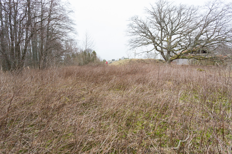 Område som planeras att restaureras i år.