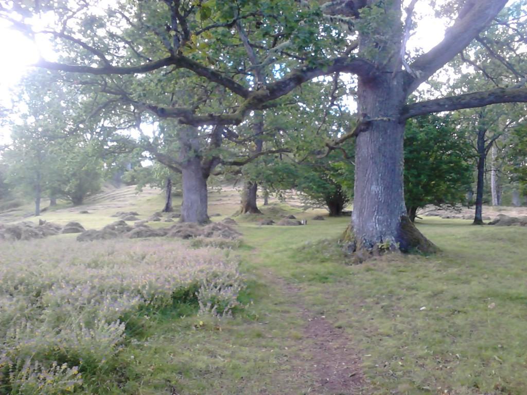 Tjälvesta äng är en löväng med ganska gott inslag av träd, då främst ek, hassel och björk. Många träd har hög ålder. Om våren fagas ängen vilket underlättar lieslåttern avseevärt.