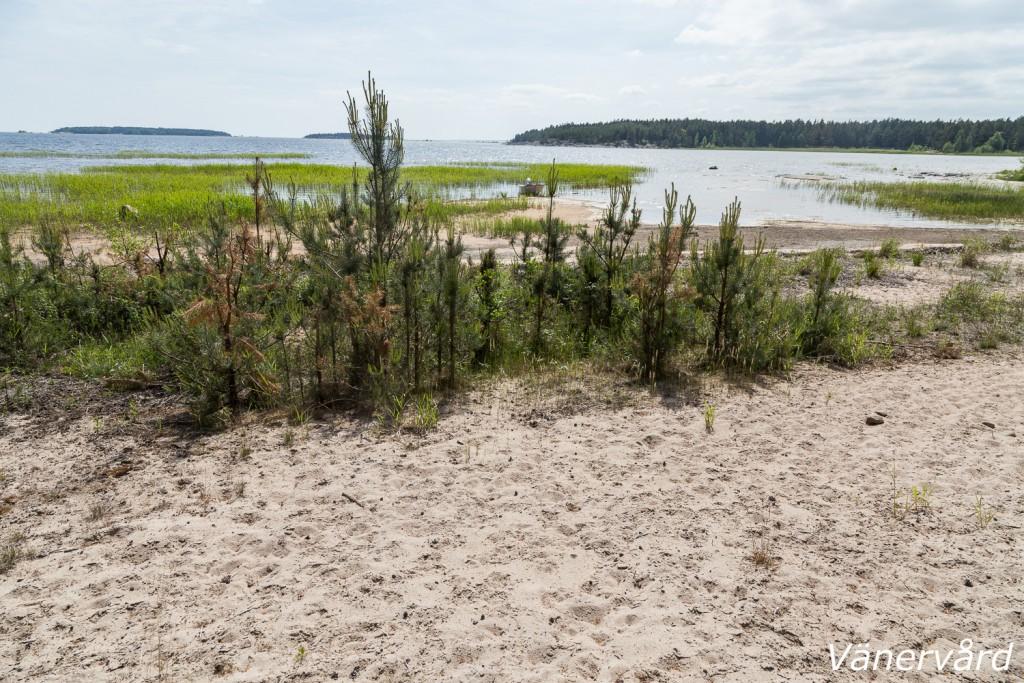 Onsö sandstrand ska restaureras under hösten 2015.