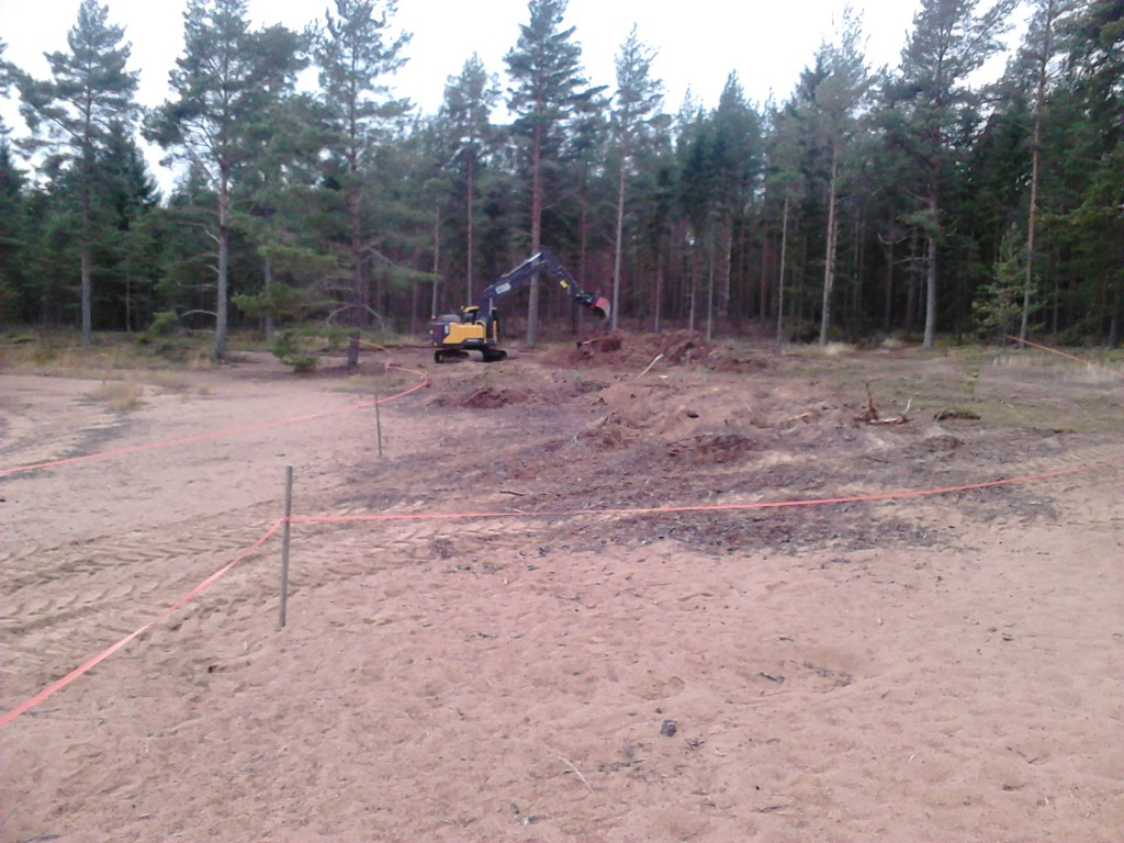 Grävmaskinisten rotrycker och skalar av förnalagret för att sedan blottlägga sanden.
