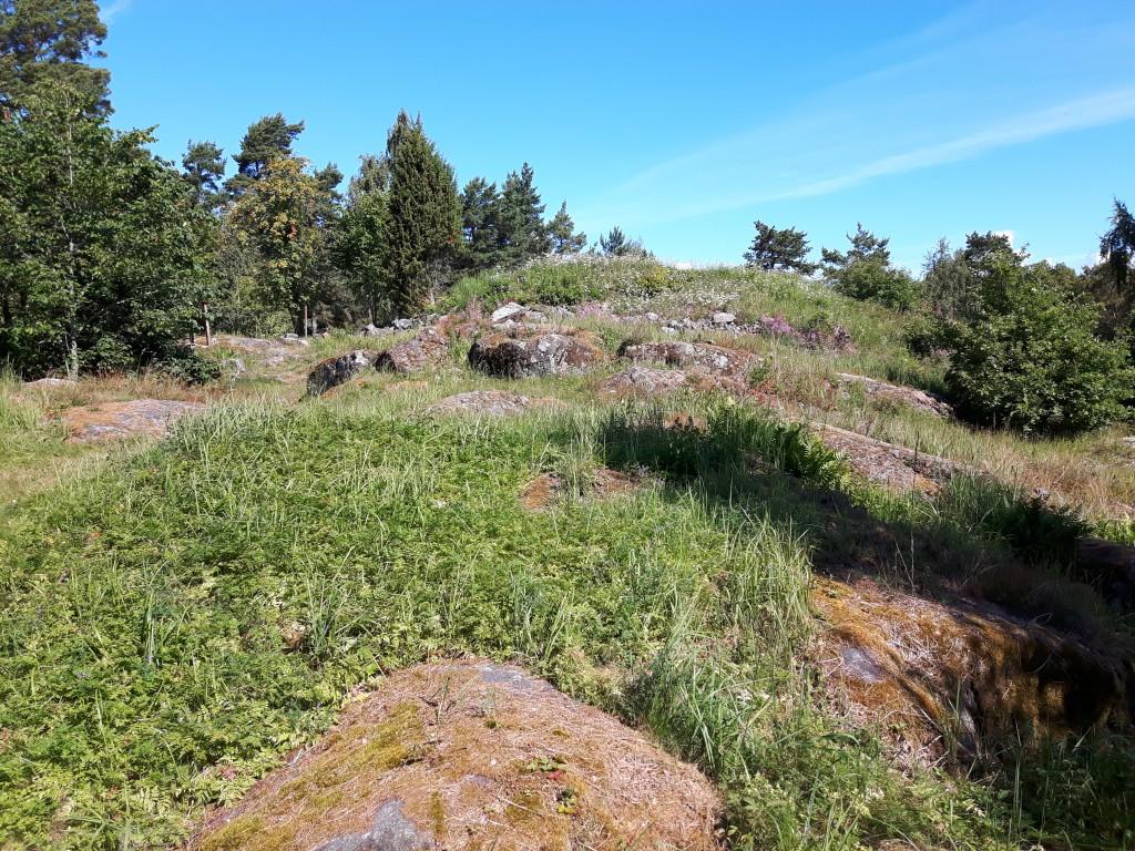 Gräset på Saxholmen hade i partier vuxit sig högt, framförallt i de omrörda ytorna (där de grävt).