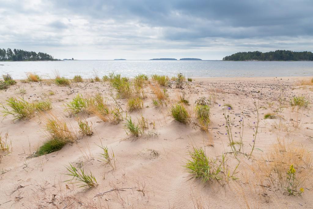 Sanddrift på Kvinnholms sand och uppbyggnad av sanddyner. Fantastiskt!